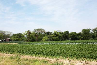 ながと育ち野菜の畑